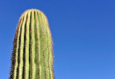 Cactus and blue sky Stock Photo