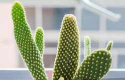 Cactus Stock Photo