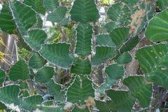 Cactus bon de papier peint avec les pièces plates photos stock