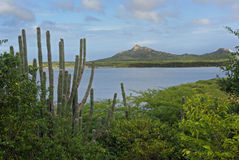Cactus in Bonaire. Cactus and green bushes in Bonaire Stock Photography