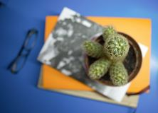 Cactus on books Stock Image