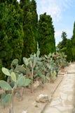 Cactus botaincal garden of Balchik Royalty Free Stock Image