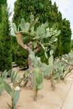 Cactus botaincal garden of Balchik Stock Images