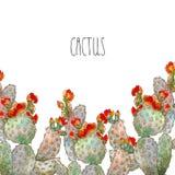 Cactus botanique d'illustration de frontière d'aquarelle, objet d'isolement, tropiques Photos libres de droits