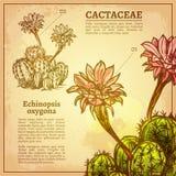 Cactus Botanische Illustratie vector illustratie