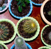 Cactus. Cactus on a brown background Royalty Free Stock Photo