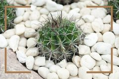 Cactus with brown frame at the garden. stock images