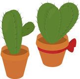 Cactus in  brown pot, desert green flora, prickly plant, thorny, spiny Royalty Free Stock Images