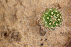 Cactus from bug eye view Royalty Free Stock Images
