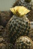 Cactus. Cacti growing in a botanical garden Stock Photos