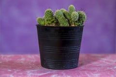 Cactus 10 stock image