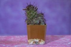 Cactus 9 stock photo