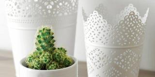Cactus, Cactus, Plant, Containers Stock Photo