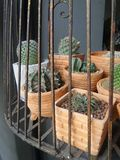 Cactus  in cage Stock Photo