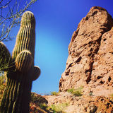 Cactus on Camelback Mountain Stock Photography