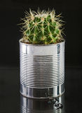 Cactus in a can Royalty Free Stock Images