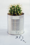 Cactus in a can Royalty Free Stock Image