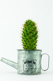 Cactus in a Can in White Background Royalty Free Stock Image