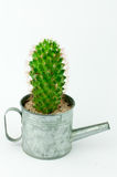 Cactus in a Can in White Background Royalty Free Stock Images