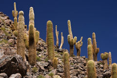 Cactus Canyon near San Pedro de Atacama - Chile Royalty Free Stock Images