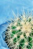 Cactus cercano para arriba en el fondo azul Imagen de archivo