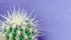 Cactus cercano para arriba en el fondo púrpura Foto de archivo libre de regalías