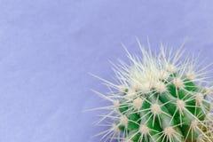 Cactus cercano para arriba en el fondo púrpura Imágenes de archivo libres de regalías
