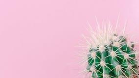 Cactus cercano para arriba en el fondo rosado Imágenes de archivo libres de regalías