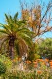 Cactus che fiorisce e palma Immagine Stock Libera da Diritti