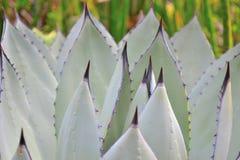Cactus chez Krohn Photos libres de droits