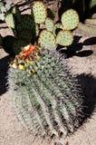 Cactus chez San Xavier del Bac la mission catholique espagnole Tucson Arizona Photo libre de droits
