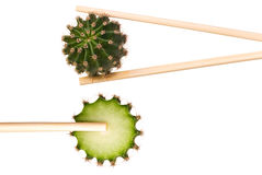 Cactus in chopsticks Royalty Free Stock Photography