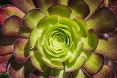 Cactus circular Imagen de archivo libre de regalías