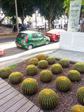 Cactus in the city. Trip in Tel Aviv, Rothschild Boulevard Stock Photo