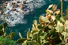 Cactus on a cliff Royalty Free Stock Photo