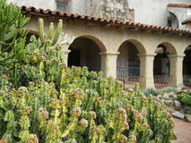Cactus in the Cloisters Stock Photo