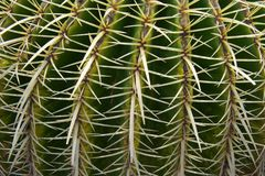 Cactus close-up. Picture of a cactus closeup Royalty Free Stock Photography