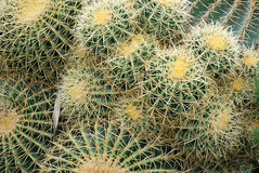 Cactus close-up Royalty Free Stock Photo