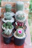 Cactus. Close up of beautiful cactus stock image