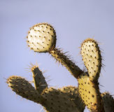 Cactus close up with big spines. Cactus close up with many big spines Stock Photo