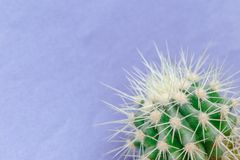 Cactus close up on the purple background Royalty Free Stock Images