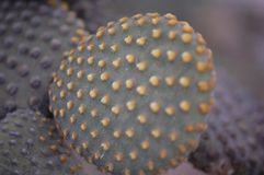 Cactus close-up stock image