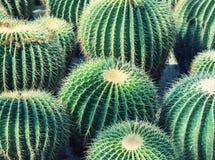 Cactus close up. In garden Stock Photography