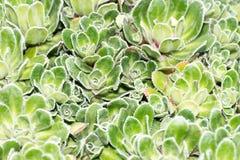 Cactus close up in the garden Stock Photos