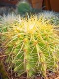 Cactus. Stock Photos