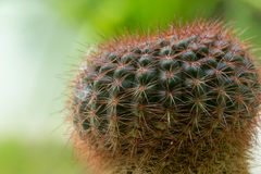 Cactus Close up With macro lens royalty free stock images