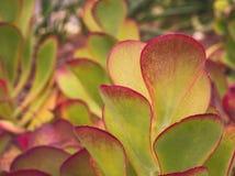 Cactus close up. Over abstract garden background Stock Photos