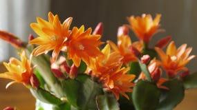 Cactus. Stock Image