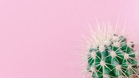 Cactus close up on the pink background Royalty Free Stock Images