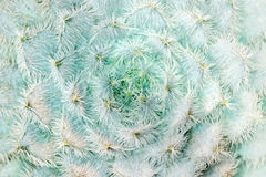 Cactus close-up. Plants and trees: cactus close-up, abstract floral pattern Stock Photography